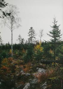 Bilde av Fine Little Day Nordland plakat 50*70cm (uten